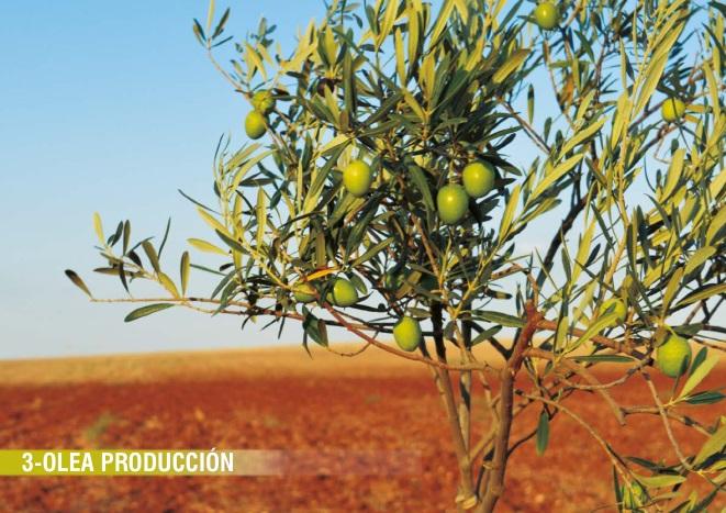 Olivos Producción
